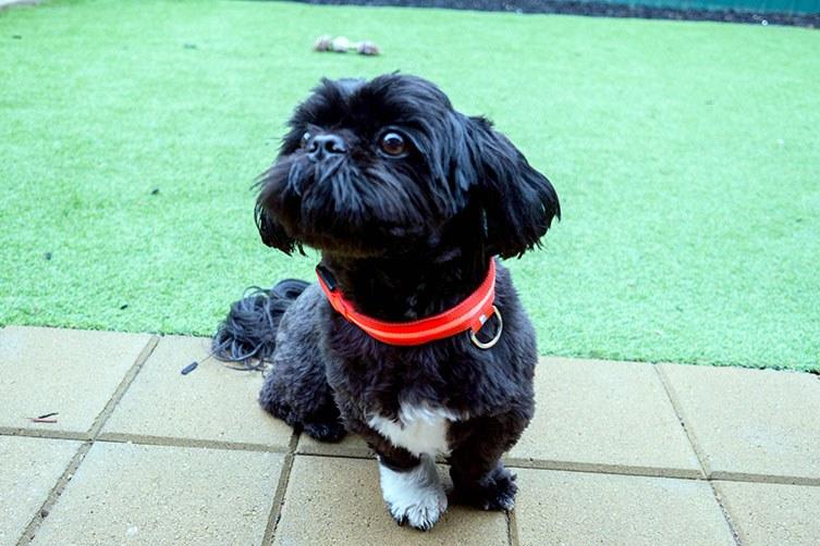 Buy-LED-Dog-Collars-Australia