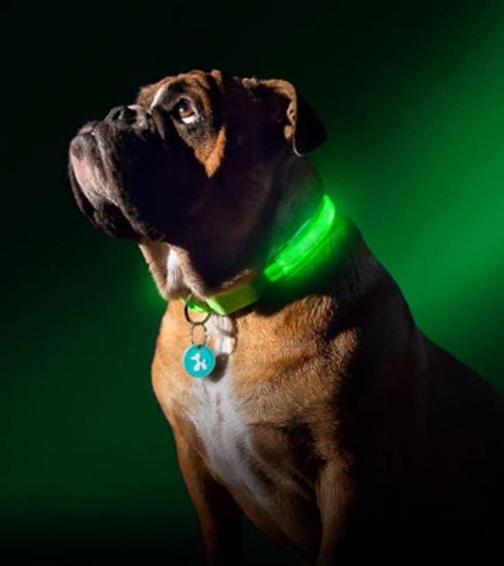 Led-Dog-Collar_IMG19